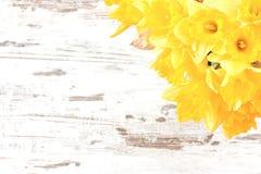 Bos van gele narcissen Royalty-vrije Stock Afbeeldingen