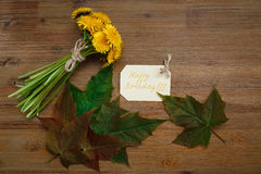 Bos van Gele Paardebloemen, de Kaart van de Verjaardagswens, Groene Bladeren De Achtergrond van Autumn Garden Houten lijst Royalty-vrije Stock Foto's