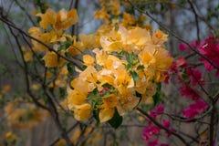 Bos van gele wilde bloemen Stock Fotografie
