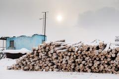 Bos van gezaagde berklogboeken en blauwe wachtcabine in de winter bewolkte dag Stock Fotografie