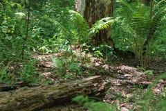 Bos van groen Stock Afbeelding