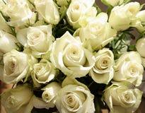 Bos van groenachtige witte rozen, achtergrond Stock Afbeeldingen