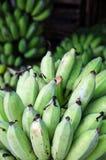 Bos van groene bananen Stock Fotografie