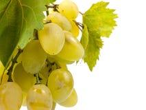 Bos van groene druif Royalty-vrije Stock Afbeeldingen