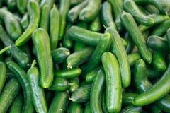 Bos van groene kleine komkommers op de markt Royalty-vrije Stock Afbeeldingen