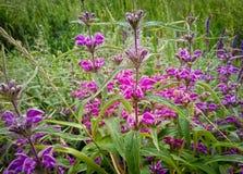 Bos van helder gekleurde bloemen stock foto's