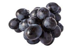 Bos van heldere blauwe druiven op een witte achtergrond Royalty-vrije Stock Afbeelding