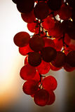 Bos van het fruit van de Druif bij zonsondergang Stock Fotografie