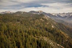 Bos van het sequoia het Nationale Park, Californië stock foto