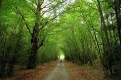 Bos van hoge mountaine in het Nationale Park van Ordesa in Spanje Royalty-vrije Stock Afbeeldingen