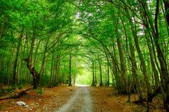 Bos van hoge mountaine in het Nationale Park van Ordesa in Spanje Stock Afbeeldingen