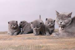 Bos van katjes, moederkat met hen Stock Afbeeldingen