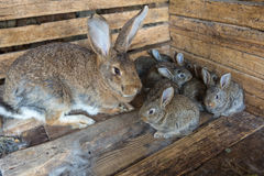 Bos van konijnen Stock Fotografie