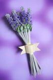 Bos van lavendel Stock Afbeeldingen