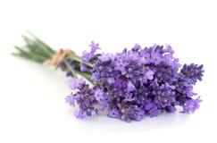 Bos van lavendel Stock Afbeelding
