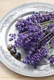 Bos van lavendel Stock Foto