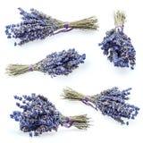 Bos van lavendel royalty-vrije stock fotografie