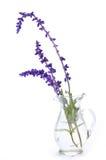 Bos van lavendel Royalty-vrije Stock Afbeelding