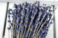 Bos van lavendel royalty-vrije stock foto
