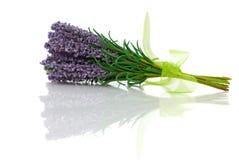 Bos van lavendelbloem Stock Fotografie