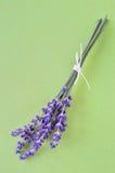 Bos van lavendelbloemen op groene achtergrond. Stock Afbeelding