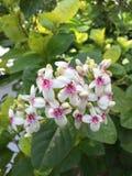 Bos van mooie kleine bloemen stock foto's