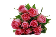 Bos van mooie rozen Royalty-vrije Stock Fotografie