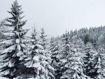 Bos van naaldbomen in sneeuw in de winter worden behandeld die royalty-vrije stock fotografie