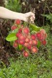 Bos van negritofruit op hand Stock Foto