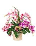 Bos van orchideeën Royalty-vrije Stock Foto