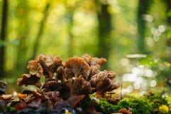 Bos van paddestoelen op een bokehachtergrond stock foto's