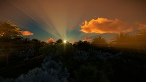 Bos van palmen en mooie zonsopgang, 4K stock videobeelden