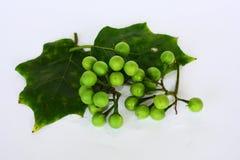 Bos van Pea Eggplant en blad op witte achtergrond stock afbeeldingen