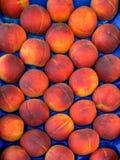 Bos van perziken Stock Afbeelding