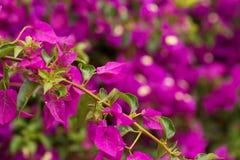 Bos van purpere bloemen Stock Foto