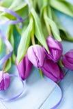 Bos van purpere tulpen Royalty-vrije Stock Foto's