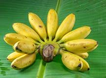 Bos van rijpe bananen op witte achtergrond Stock Foto
