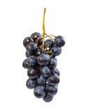 Bos van rijpe druiven met waterdalingen Stock Foto's