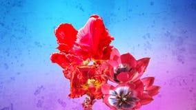 Bos van rode bloeiende tulpen Stock Afbeelding