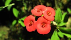 Bos van rode bloem Stock Afbeeldingen