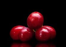Bos van rode druiven Stock Fotografie