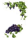 Bos van rode druiven royalty-vrije illustratie