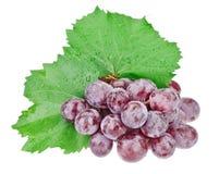 Bos van rode druiven met waterdalingen Royalty-vrije Stock Afbeelding