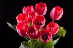 Bos van rode tulpen Royalty-vrije Stock Afbeelding
