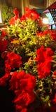 Bos van rood-Groene bloem royalty-vrije stock afbeeldingen