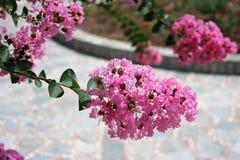 Bos van roze bloemen stock foto