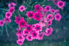 Bos van Roze Bloemen Royalty-vrije Stock Afbeeldingen