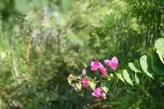 Bos van Roze Bloemen Stock Afbeelding