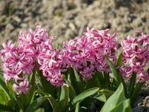 Bos van roze bloemenachtergrond royalty-vrije stock foto