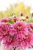 Bos van roze chrysantenbloemen royalty-vrije stock afbeeldingen